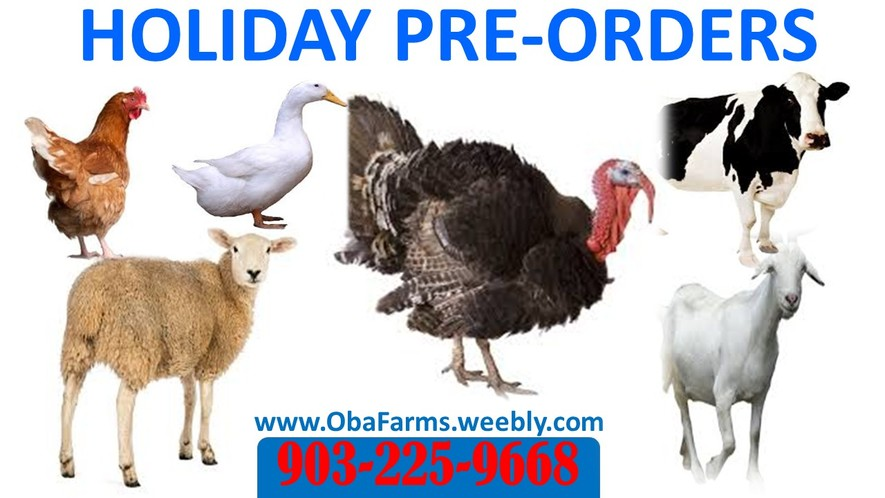 ducks, turkeys, chickens, goats, lamb for sales in Texas